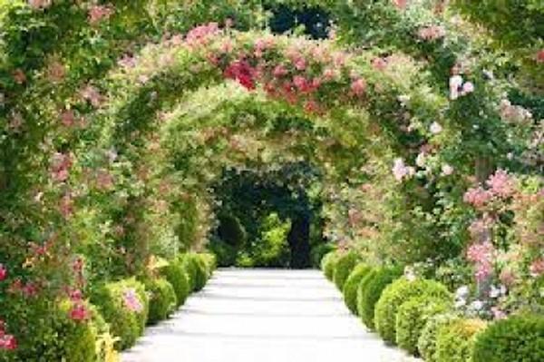 Giardino fiorito for Giardino fiorito