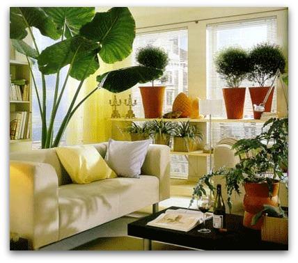 Come innaffiare le piante d\'appartamento durante le vacanze
