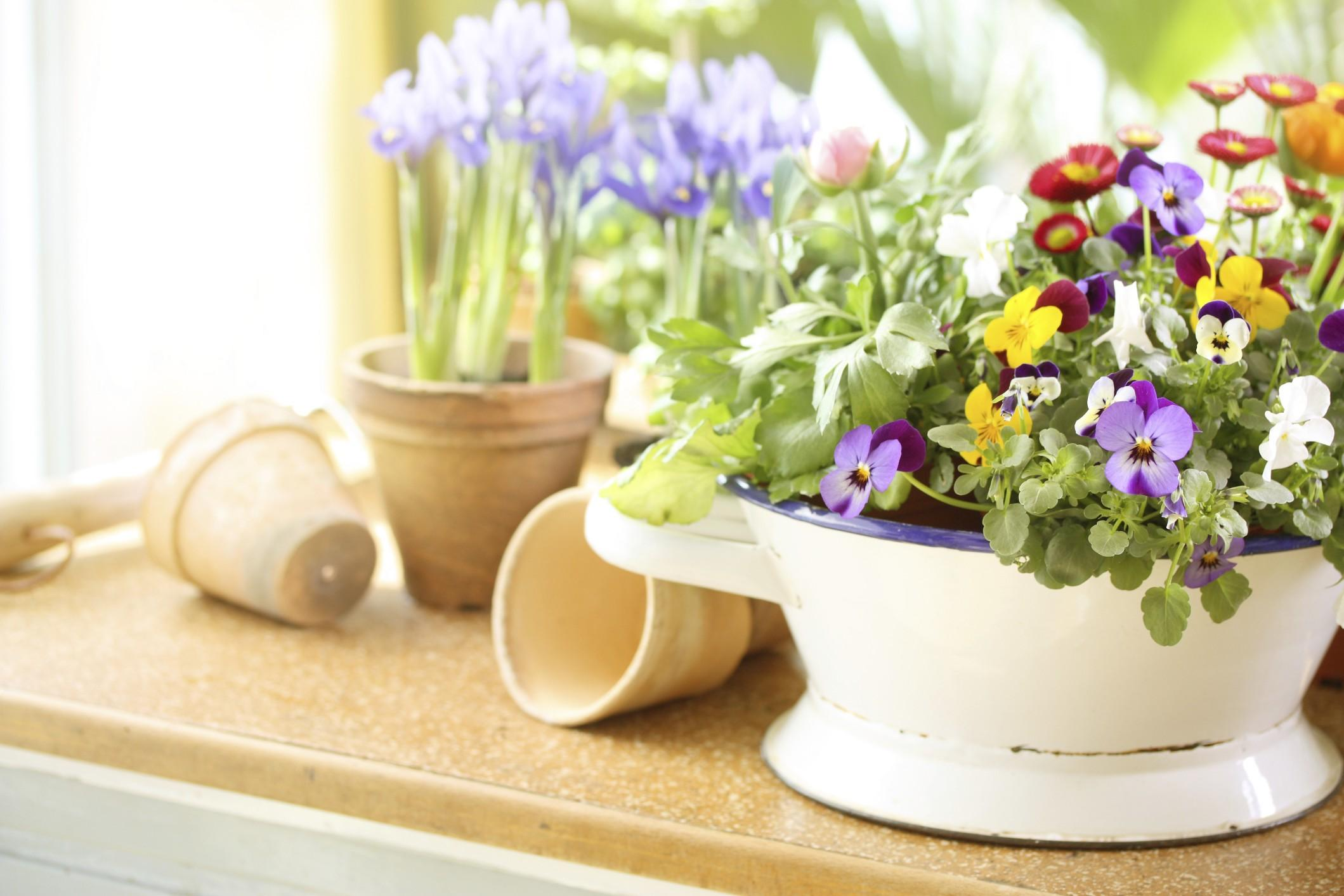 Prepara la tua casa alla bella stagione con l'usato di mercatopoli ...