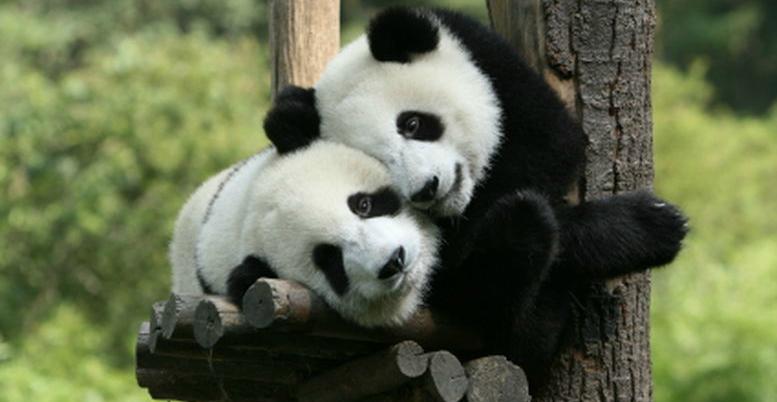 adottare animali a rischio di estinzione