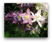 I fiori di Castellaro Lagusello