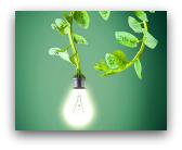 energia rinnovabile dalle piante